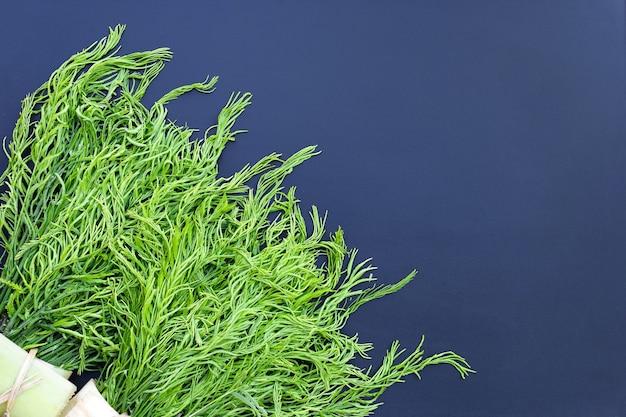 Escalade des feuilles d'acacia ou d'acacia sur un mur sombre.