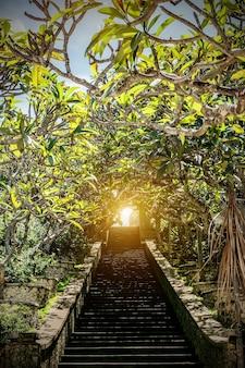Escalier en haut, plantes vertes autour, lumière au bout.