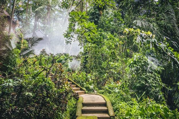 Escalier menant à une station au milieu d'une forêt