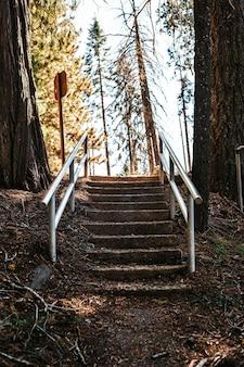 Escalier recouvert de terre avec garde-corps en métal dans les bois