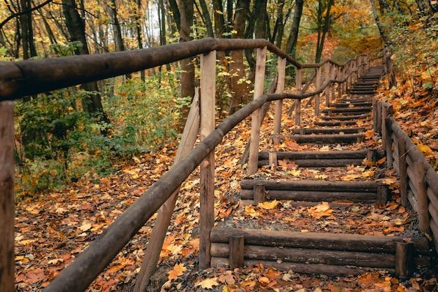 Escaliers dans le parc d'automne saison d'automne