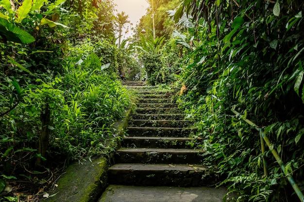 Escaliers en pierre dans la jungle.
