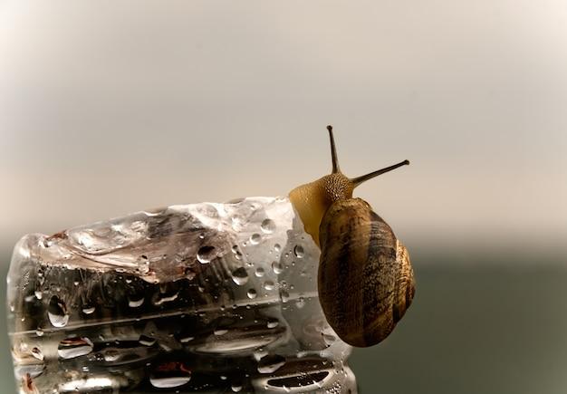 Escargot sur une bouteille d'eau