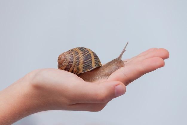 Escargot comestible sur la main de l'enfant sur fond gris.