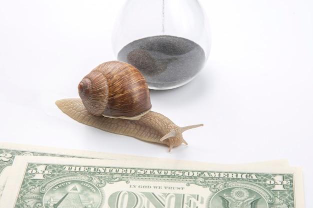 Escargot à côté du sablier et des dollars sur fond blanc.