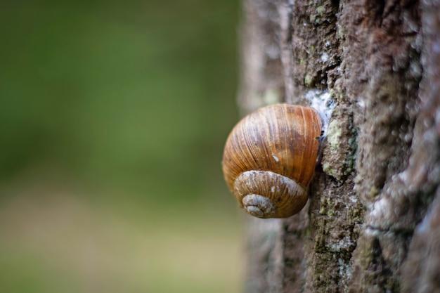 Escargot sur l'écorce d'un tronc d'arbre.