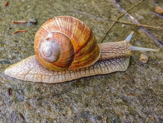 L'escargot est allé à un voyage dans un jour de pluie.