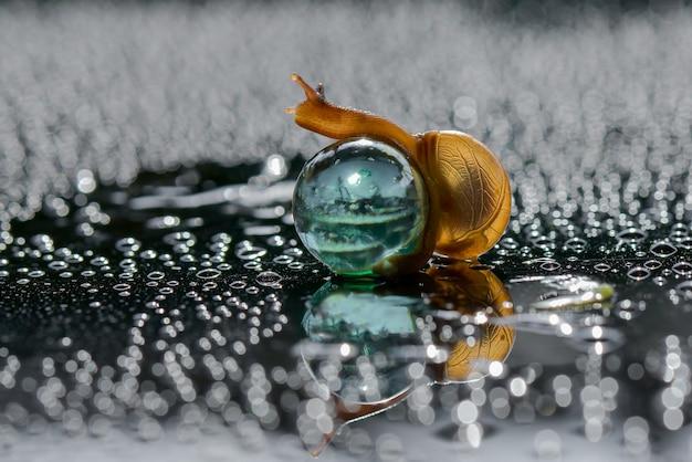 Escargot jouant aux billes