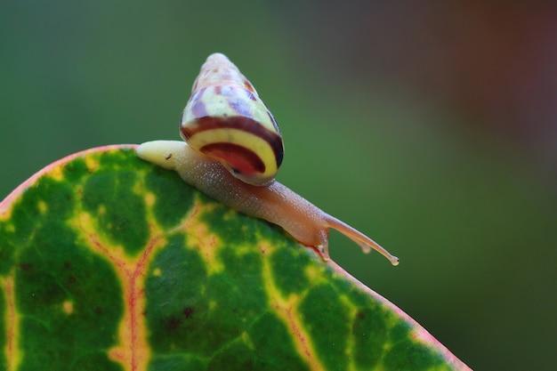 Escargot léopard vue de côté sur les feuilles