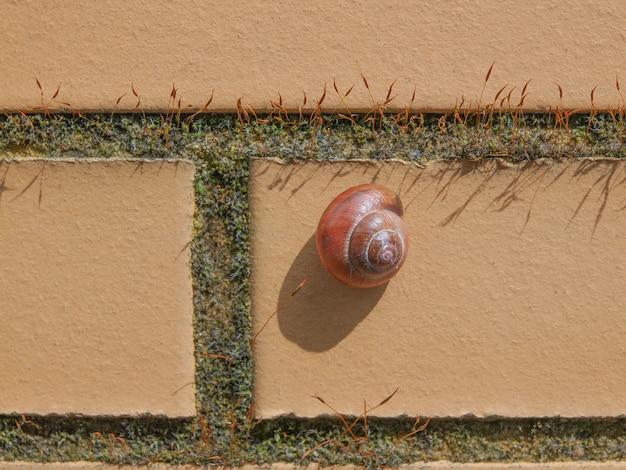 Escargot de limace sur un mur
