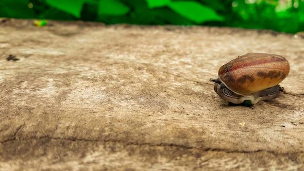 Un escargot sur plancher en bois en automne fond