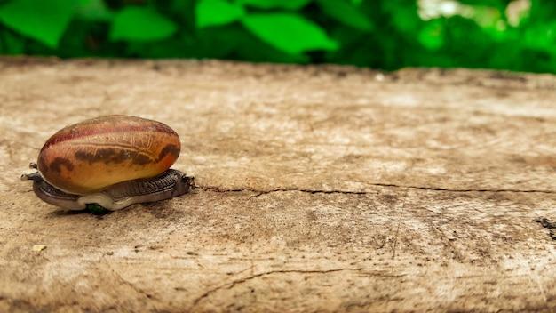 Un escargot sur un plancher en bois en automne