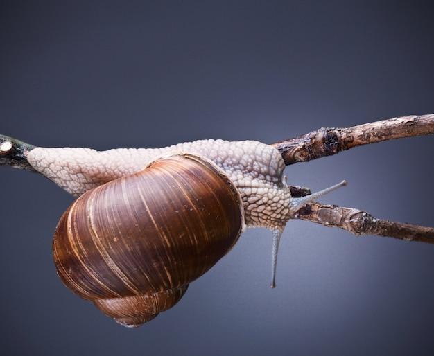 Escargot sur plante