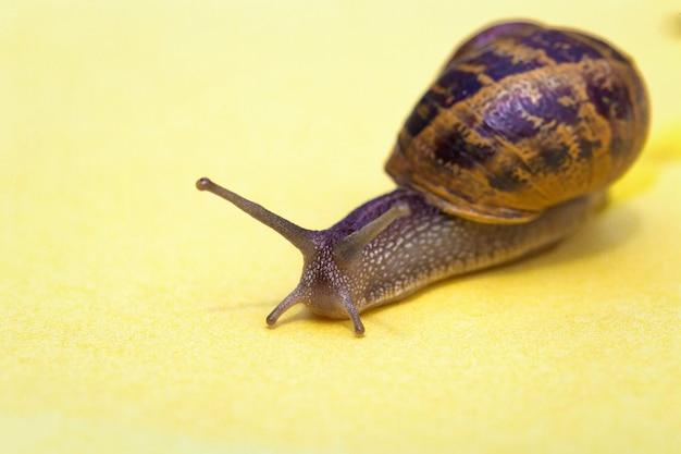 Escargot rampant sur un fond pastel coloré