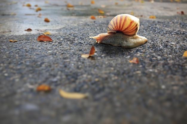 Escargot sur route