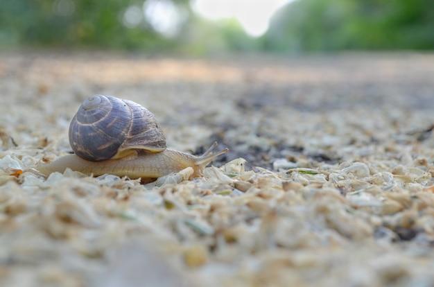Escargot se déplaçant sur la route