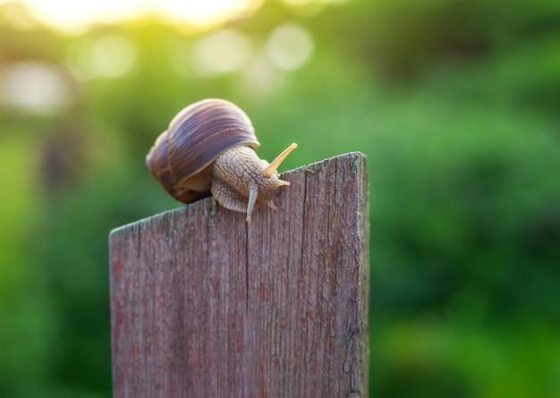 Escargot sur la vieille clôture en bois et le fond vert