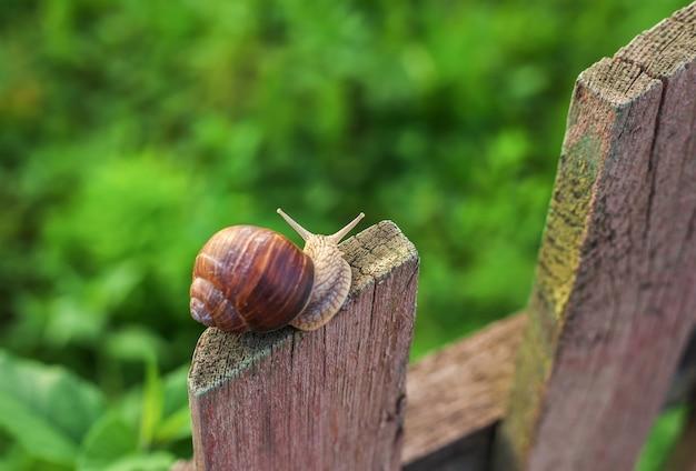 Escargot sur la vieille clôture en bois et l'herbe verte. vue d'en-haut