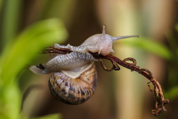 Escargot vivant à l'état sauvage à la campagne