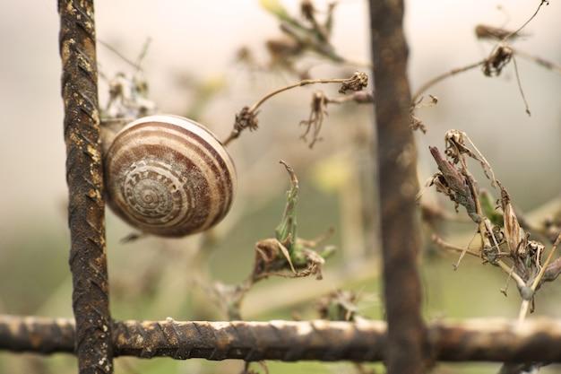 Escargots en barres de fer