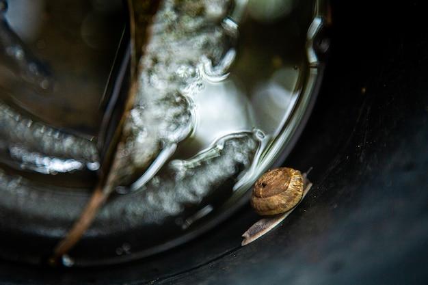 Escargots dans le bassin