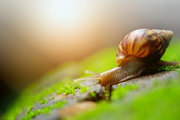 Les escargots marchaient lentement sur le sol.