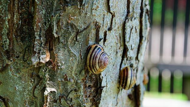 Escargots de raisin sur un arbre