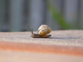 Escargots, des reptiles