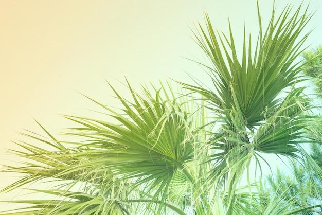 Espace de copie d'effets pastel vintage ton sur ton de vacances