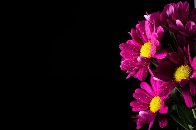 Espace copie avec fleurs épanouies