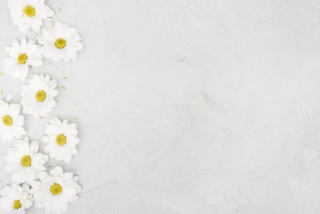 Espace copie fleurs de marguerite de printemps