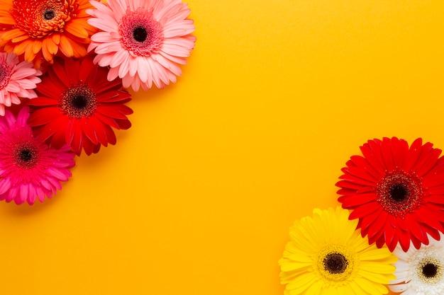Espace de copie orange et fleurs de marguerite gerbera