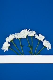 Espace copie papier vierge. cadre avec fleurs. chrysanthèmes blancs. espace bleu bouquet simple. carte de voeux