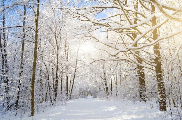 Espèces hivernales de branches d'arbres couvertes de neige contre un ciel bleu clair et givré.