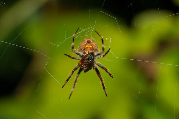 Espèces indigènes d'insectes dans la forêt tropicale