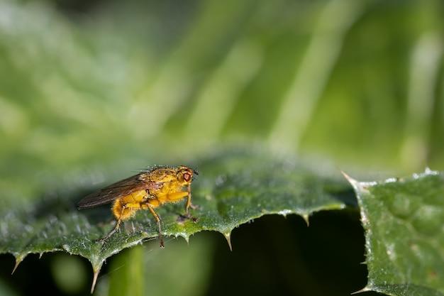Espèces de mouches photographiées dans leur environnement naturel