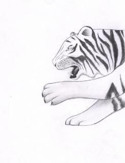 Esquisse du tigre