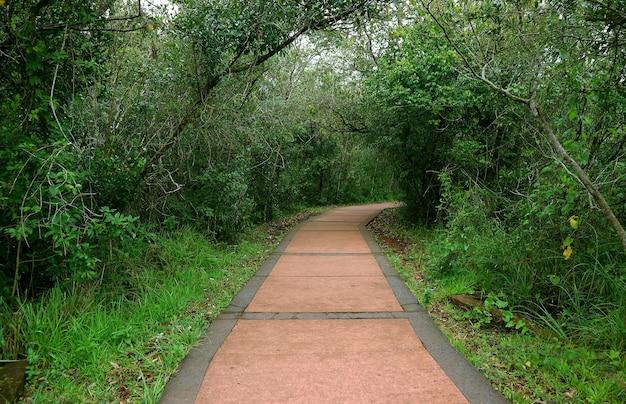 Essai de randonnée dans la jungle dans le parc national d'iguasu, argentine
