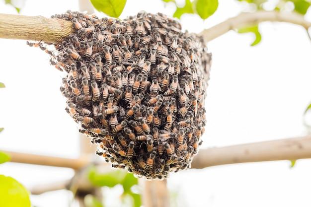 Un essaim d'abeilles sur un arbre