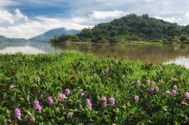 C'est daklak, un pays d'éléphants et de cascades, une province au centre du vietnam montagneux.