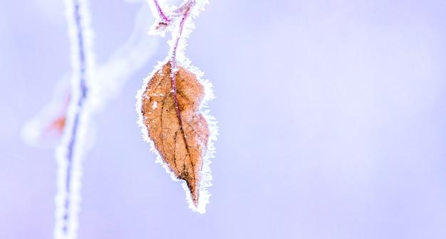 Est recouvert de feuilles sèches givrées sur une branche d'arbre. espace de copie_