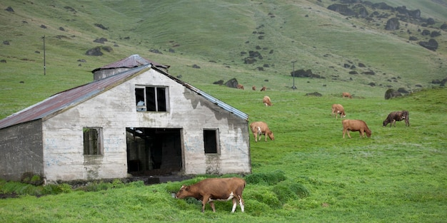 Étable sur une colline accidentée avec du bétail