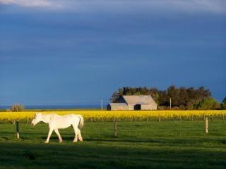 Étain blanc cheval et vieux hangar