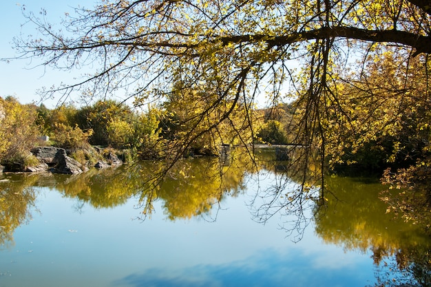 Étang en automne, feuilles jaunes