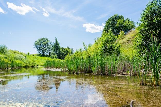 Étang calme avec roseaux entouré de prairies et d'arbres