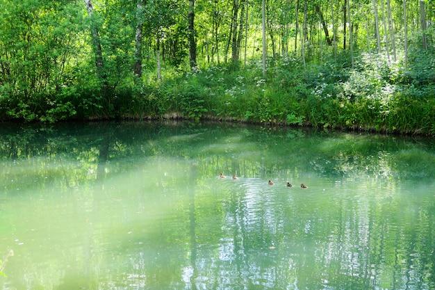 Étang de forêt tranquille encadré par un parc boisé vert luxuriant au soleil