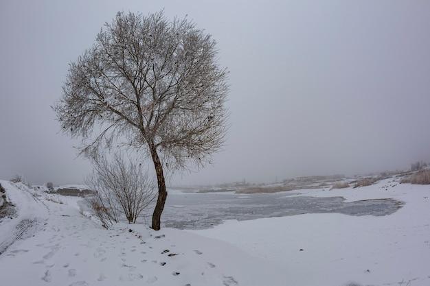 Étang gelé avec rivage couvert de neige et un arbre en janvier
