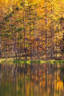 Étang de mishaka en automne. situé dans la ville de chino, préfecture de nagano, au japon