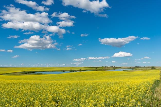 Étang de prairie et cour sur une colline entourée d'un champ de canola