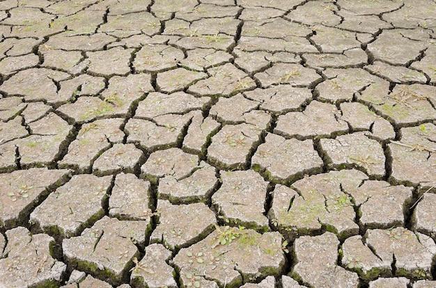Étang sec avec terre craquelée 8